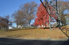 Trees with red leaves in late autumn royalty free stock photo