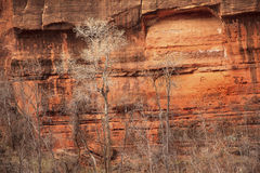 Trees Red Rock Canyon Walls Zion Stock Images