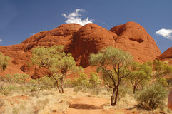Trees with red rocks in Australia Royalty Free Stock Image