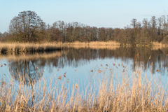 Trees and reed grass reflecting in water Stock Images