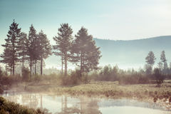 Trees and reeds near the misty lake Stock Photography