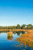 Trees and reeds reflected in the mirror smooth water surface Royalty Free Stock Photos