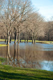 Trees refelected in floodwaters. Trees reflecting in floodwaters of Packanack Lake Golf Course in Wayne, NJ after heavy rainfall and snowmelt Stock Image