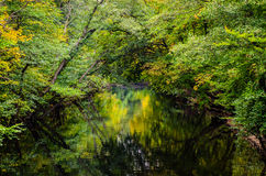 Trees reflect in lake. Forest/trees reflects in lake stock image