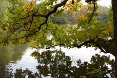 Trees reflected in a calm lake water. Autumn trees reflected in a calm lake water Royalty Free Stock Photography