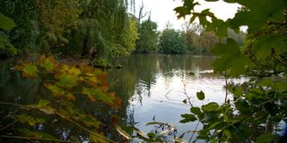 Trees reflected in a calm lake water. Autumn trees reflected in a calm lake water Stock Photography