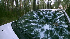 Trees reflected in car window. Windshield reflection. Car driving on a Country road. stock video