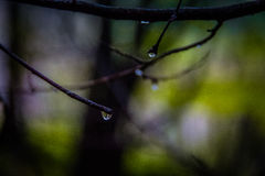 Trees reflected in a drop Royalty Free Stock Photo