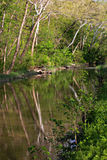 Trees Reflected in the Erie Canal, Ohio Stock Images