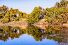 Free Trees Reflected In The Calm Waters Of The Wetlands Of Merced National Refuge On A Sunny Fall Day; Central California Stock Photo - 164196950