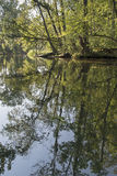 Trees reflected Royalty Free Stock Photography
