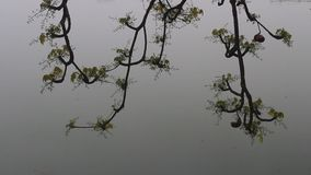 Trees reflected into the lake. The trees reflected into the lake stock video