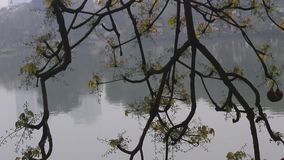 Trees reflected into the lake. The trees reflected into the lake stock footage
