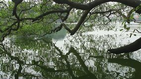 Trees reflected into the lake. The trees reflected into the lake stock video footage