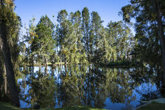 Trees reflected in the lake Royalty Free Stock Image