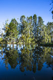 Trees reflected in the lake Royalty Free Stock Photo