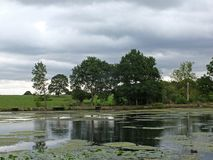 Trees reflected in a lake with pond lilies and surrounding meadow royalty free stock photo