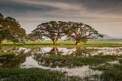 Trees reflected in lake Tissa Wewa, Sri Lanka. Trees in lake Tissa Wewa, Tissamaharama, near Yala National Park, Sri Lanka stock photos