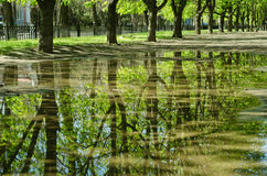 Trees reflected in a puddle Royalty Free Stock Photo