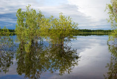 Trees  reflected in quiet water of lake. Royalty Free Stock Photography