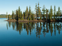 Trees reflected in still, blue lake. Trees of forest reflected in the still water of Waldo Lake, Oregon with rocky shore, driftwood and forest in distance Stock Image