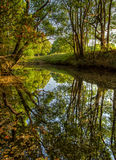 Trees Reflected in Water Royalty Free Stock Images