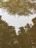 trees reflected Stock Image