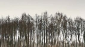 Trees reflected in water. Background loop ready file stock video footage