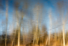 Trees reflected in water Stock Image