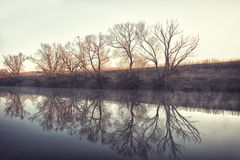 Trees are reflected in water early in the morning in the spring Stock Photo