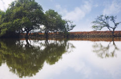 Trees reflected in the water Stock Photography