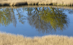Trees are reflected in the water Royalty Free Stock Photos
