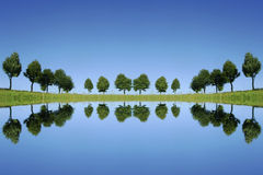 Trees reflecting Stock Images