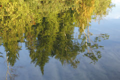 Trees Reflecting in a Lake Royalty Free Stock Photo