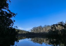 Trees reflecting in a Lake in the middle of the forrest, New South Wales, Australia. Lake in the middle of the forrest, New South Wales, Australia stock photography