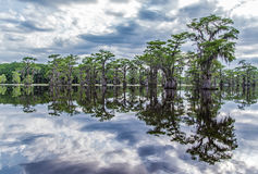 Trees reflecting on lake Royalty Free Stock Photo