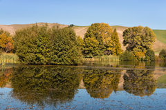 Trees reflecting on lake surface Royalty Free Stock Photography