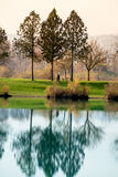 Trees reflecting in the lake Stock Photos