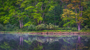 Trees reflecting in a pond at Delaware Water Gap National Recrea. Tional Area, New Jersey Stock Photos