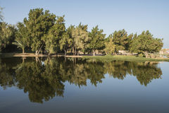 Trees reflecting in pond at a rural park Royalty Free Stock Image