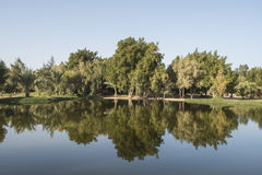 Trees reflecting in pond at a rural park Royalty Free Stock Images