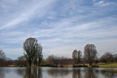 TREES REFLECTING IN A POND. Tall trees in park reflecting in pond Royalty Free Stock Image