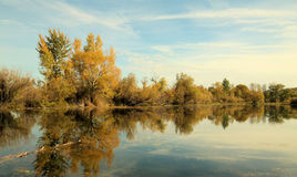 Trees reflecting into a pond Stock Photography