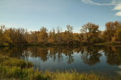 Trees reflecting into a pond Royalty Free Stock Images