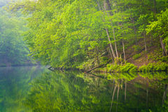 Trees reflecting in Prettyboy Reservoir, in Baltimore County, Ma Stock Photos
