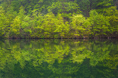 Trees reflecting in Prettyboy Reservoir in Baltimore County, Mar Stock Photography
