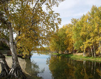 Autumn tree by river stock image