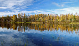 Trees reflecting in the water at autumn morning Royalty Free Stock Photography