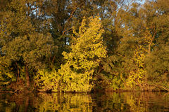 Trees reflecting in water, autumn Stock Photos
