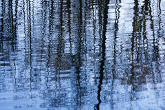 Trees reflecting in water Stock Images